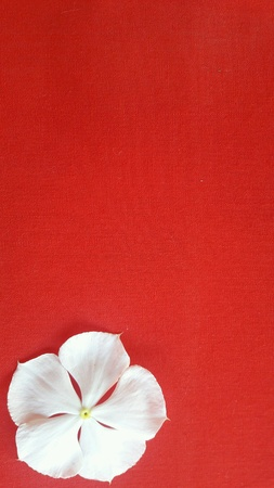 bright: White flowers on a red background.