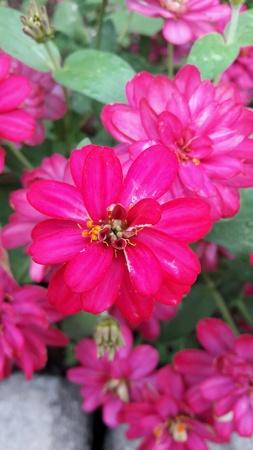 papaya flower: Pink Flowers