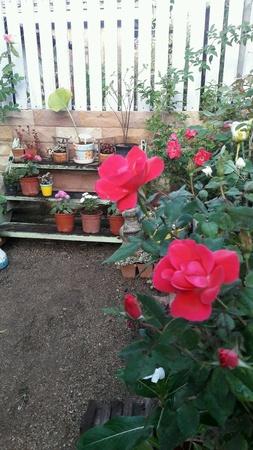 small garden: A small garden Stock Photo