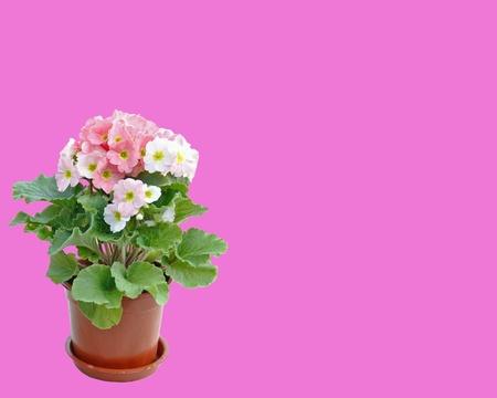 fence: Flowerpot pink background Stock Photo