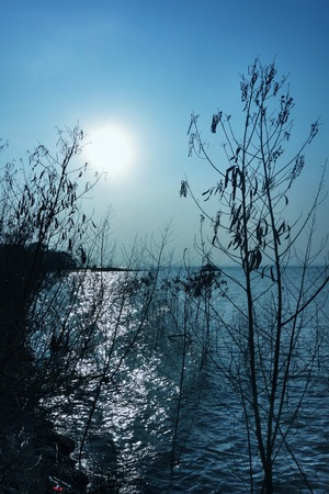 bourn:  Sunset Blue Sky Water Dry Tree