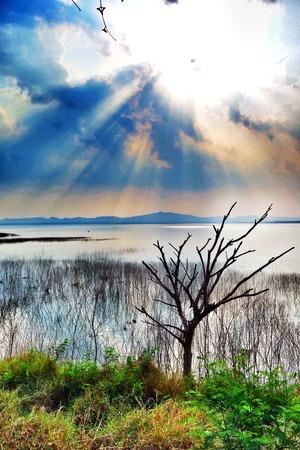 bourn: HDR Sunshine Dry Tree Lake