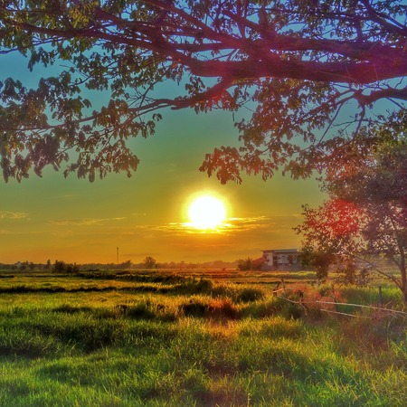 Campo verde tramonto HDR
