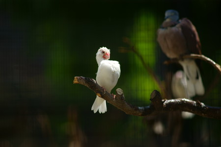 stunned: Stunned birds