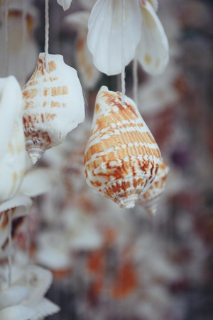wind chimes: Shell Stock Photo