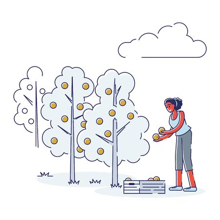 Concept Of Juice Production. Female Character Working On Plantation, Picking Oranges And Carefully Put It In Wooden Box For Further Transportation. Cartoon Linear Outline Flat Vector Illustration