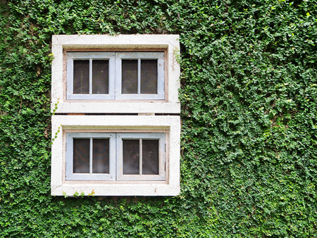 The Walls covered with Velcro green leaves edged with White window Imagens