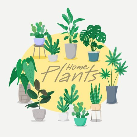 Home Plants collection Vector, Set of indoor plant vector.