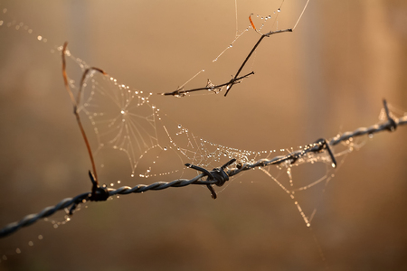 wire fence: Morning dewdrops on spiders web hanging from barbed wire