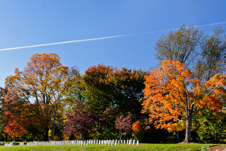 Colorful changing leaves at Arlington National Cemetery near to Washington DC, in Autumn