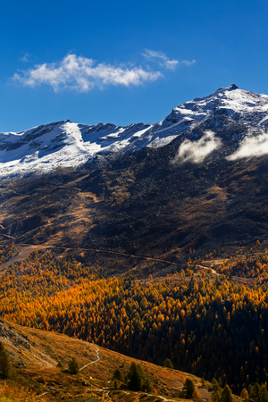 Portrait of Autumn Trees with yellow&orange color changing leaves in front of a snow covered mountain with clear blue sky near Zermat