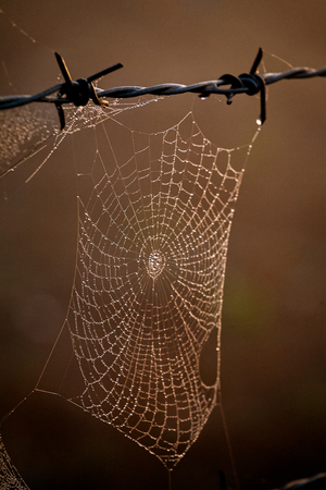 Morning dewdrops on spiders web hanging from barbed wire