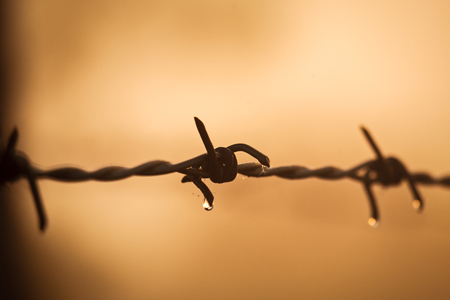 Morning dewdrops on a barbed wire