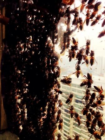 millions: Millions Of Bees