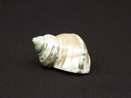 molusk: Seashell on a background of black cloth.