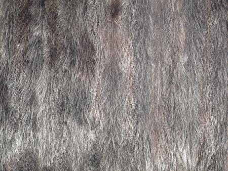 Mink fur texture closeup.