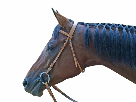 Head of brown horse on a white background. Stock Photo