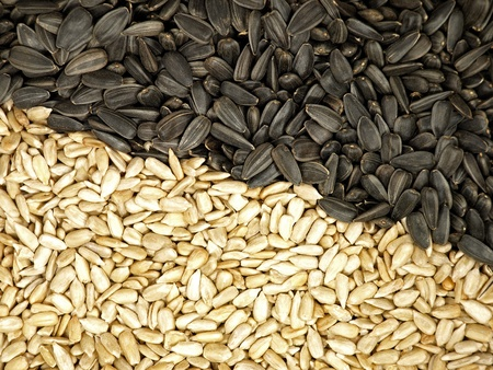 Sunflower Seeds Texture  As Background Stock Photo