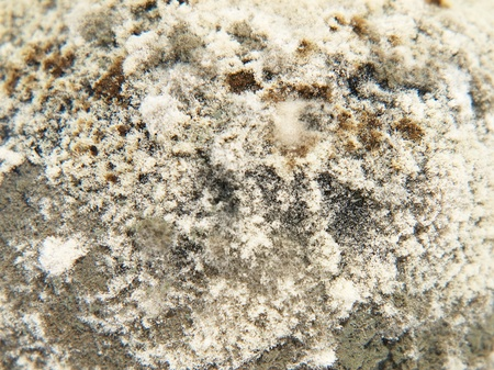 mouldy: Mold on the food waste taken closeup as abstract background. Stock Photo