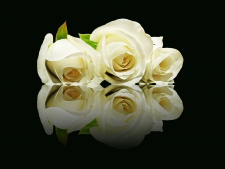 overturn: Three white roses with reflection on black background.