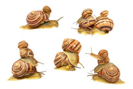 mollusc: Set of snails isolated on white background  Stock Photo
