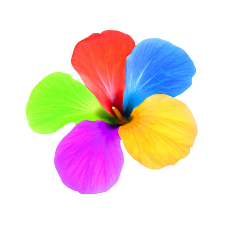 taken: Multicolored flower taken closeup isolated on white background.