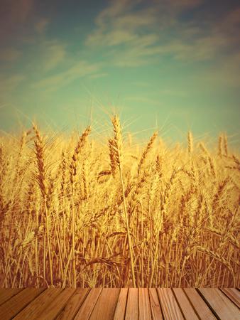 cosecha de trigo: O�dos del trigo en el campo y la madera de madera en la imagen foreground.Toned.