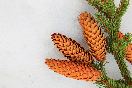 snow cone: Pine branch and fir cone on white snow taken closeup. Stock Photo