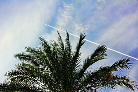 diagonally: Fighter aircraft fuel trace in the turkish blue sky over palm tree.