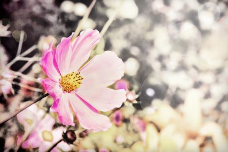toned image: Pink flower taken closeup.Retro stille toned image.