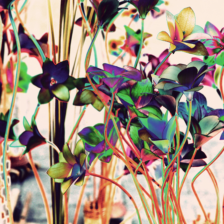 altered: Multicolored floral background.Digitally altered image.