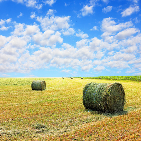 the arable land: Golden stubble field and hay bales against blue cloudy sky.