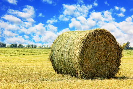 stubble: Hay bale on stubble field against cloudy sky taken closeup. Stock Photo