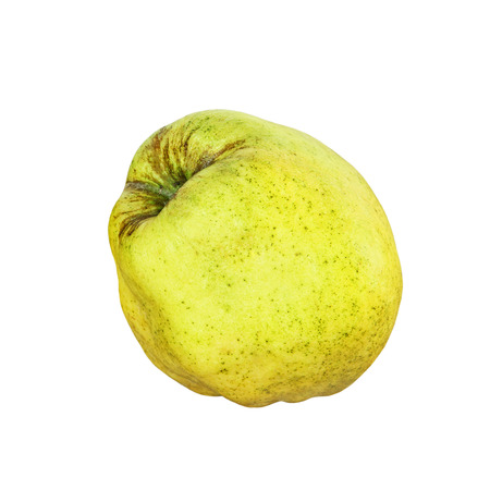 pectin: Appetizing ripe quince isolated on white background taken closeup.