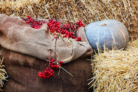Thanksgiving Display of Pumpkin on hay stacks and burlap sack with red berries taken closeup. Stock Photo