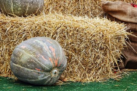 Thanksgiving Display of Big Pumpkin and hay stacks.Toned image.