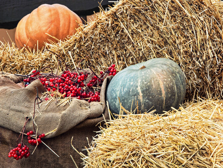 Thanksgiving Display of Pumpkin on hay stacks and burlap sack with red berries taken closeup.Toned image. Stock Photo