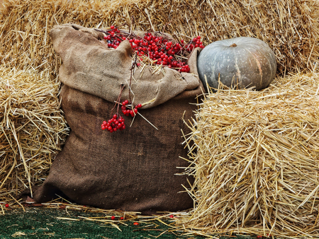 Thanksgiving Display of Pumpkin on hay stacks and burlap sack with red berries.Toned image.