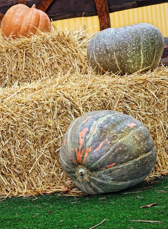 Thanksgiving Display of Pumpkins and hay stacks.Toned image.