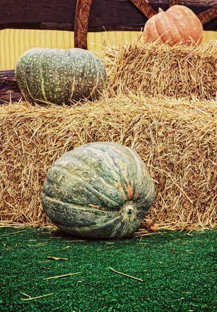 Pumpkins and hay stacks.Thanksgiving Display.Toned image. Stock Photo