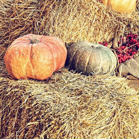 Thanksgiving Display of Pumpkin on hay bale taken closeup.Retro style toned image.