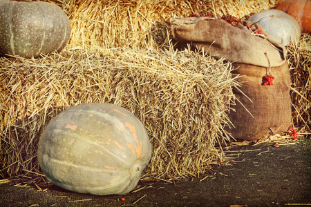 Thanksgiving Display of Big Pumpkins and hay stacks.Retro style toned image.