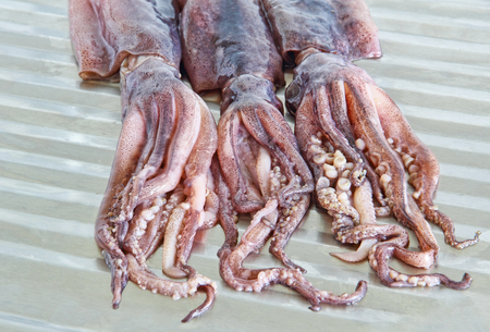 Raw squids with tentacles on metal kitchen table taken closeup. Stock Photo