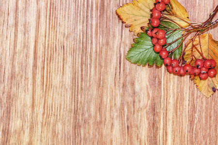 Autumn Red Mountain Ash Berries cluster and leaves on wooden background with empty space.Top view. Stock Photo