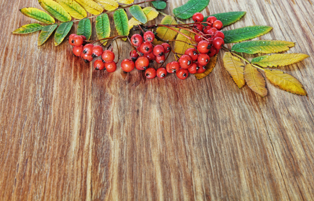 Mountain Ash Red Berries and leaves on grunge wooden background. Stock Photo