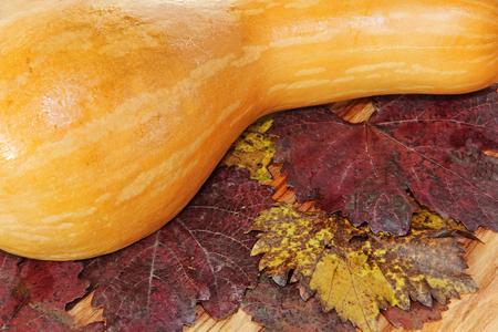 Orange Pumpkin on colorful autumn foliage taken closeup as nature background. Stock Photo