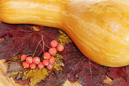 Yellow Pumpkin and red berries on colorful autumn foliage taken closeup.