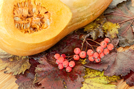 Orange sliced Pumpkin and red berries on colorful autumn foliage taken closeup. Stock Photo