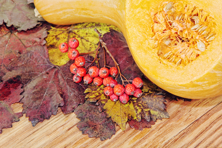 Yellow sliced Pumpkin and red berries on colorful autumn foliage taken closeup.