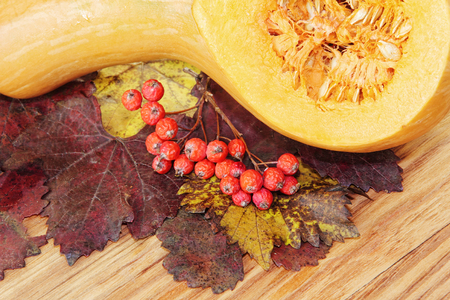 Sliced Pumpkin and red berries on colorful autumn foliage taken closeup.